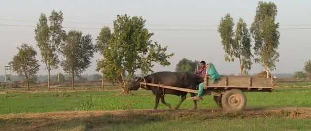 Love is Blind: American Girl Chose Rural Life in India over Luxurious & Modern American Life
